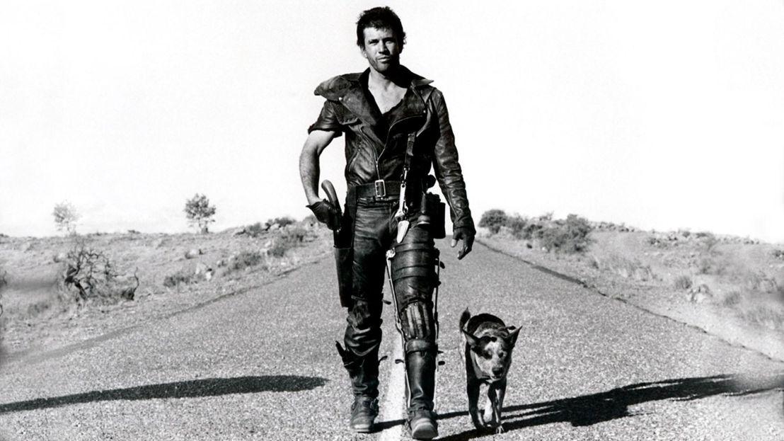roadwarriordog